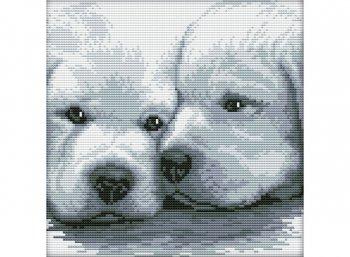 Два белых щенка