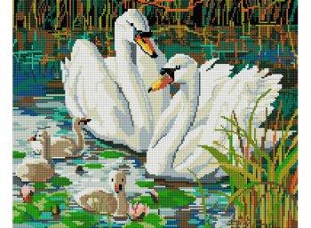 Семья лебедей