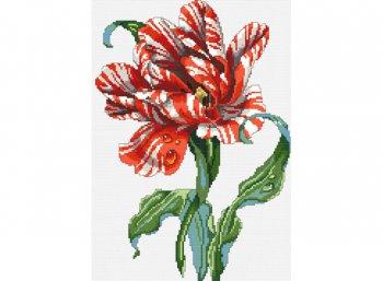 Тигровый тюльпан