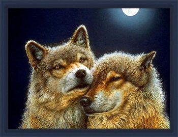 Волк и волчица