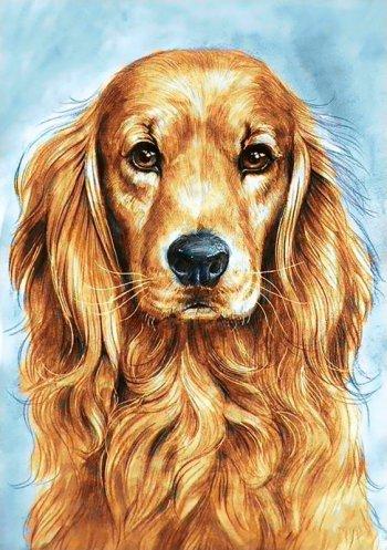 Преданный пёс