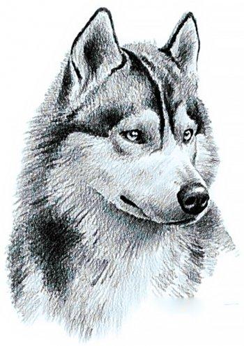 Потомок волков