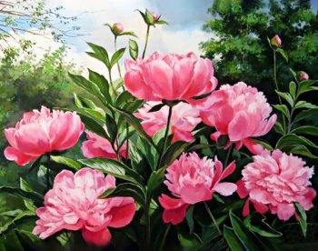 Пионов цвет