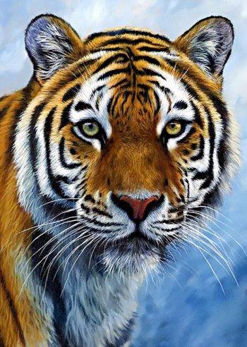 Спокойствие тигра