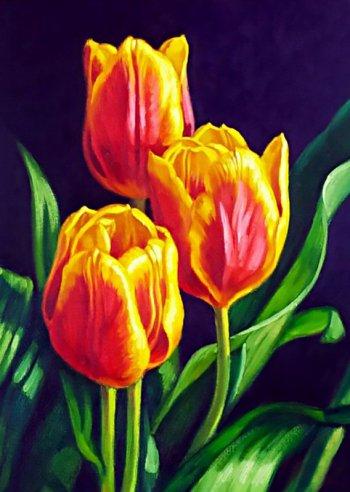 Тюльпанов цвет