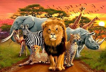 Африканские звери