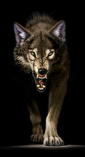 Преследующий волк