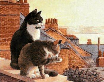 Коты на крыше