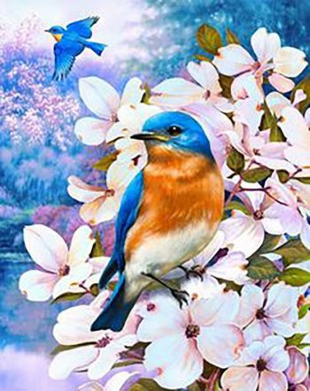 Птицы лета