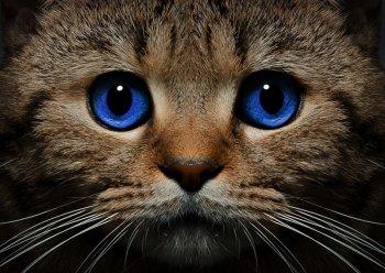 Синеглазый кот